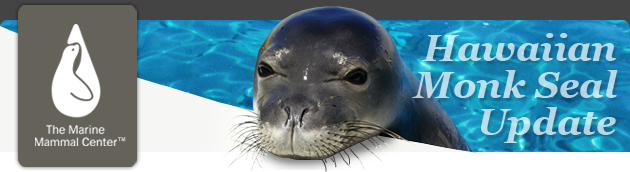 Help Us Raise $50,000 by March 17, 2013 to Save Hawaiian Monk Seals!