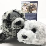 Click here for more information about Adopt-A-Seal® - Astrid & Webby Adoption Package, with Plush