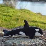Click here for more information about Orca Plush