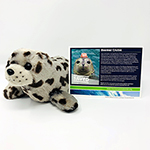 Click here for more information about Adopt-a-Seal® - Beemer Cruise Adoption Package, with Plush