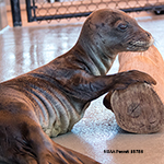 Click here for more information about Adopt-a-Seal® - Kilo