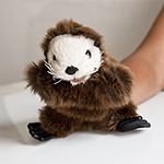 Click here for more information about Sea Otter Puppet