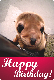 E-card - Happy Birthday - Sea Lion (1)